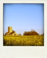 Rapeseed 1 by RoseSparrow