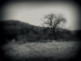 camera obscura: the tree and the hill by snusmumrikenn
