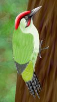 Green Woodpecker Coloured by Articuno