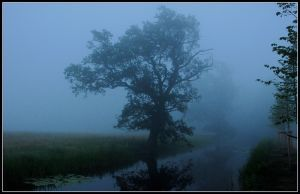 Two oaktrees at misty ditch by jchanders