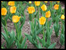 Tiptoe Through The Tulips by CeciliaSal