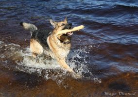 Playing in water by RaggDog