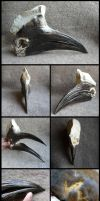 Yellow-casqued Hornbill Skull by CabinetCuriosities