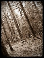 Transylvanian Forest by VooDooMania