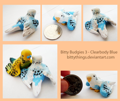 Bitty Budgies 3 - Clearbody Blue - SOLD by Bittythings