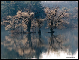 Late Autumn Island Reflections by Mogrianne