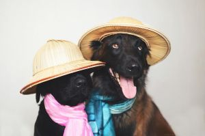 Dogs with hats by Zolfyer