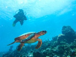 Maldives 2014  - Turtle and  Dive Buddy by OccipitalClimax