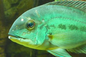 Green Severum by DingoDogPhotography