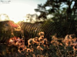 Spider is not home by Klaudiqa-scarry-doll