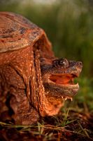 Gamera Provoked by kylewright
