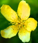 Flowers: Yellow 6 by letTheColorsRumble
