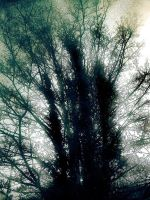 misted tree by awjay