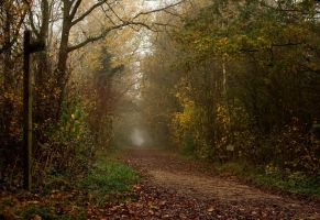 Misty Path by wkdlady