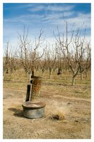 Apple Orchard  I by Athos56