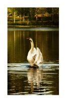 swan II by MissWhatever11291