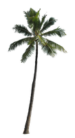 Palm 1 by Owhl-stock