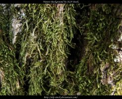 Green Moss by ALP-Stock