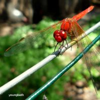 dragonfly:2 by youngbeth