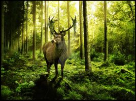 King of the Forest by Sarahroo