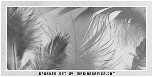 plumes brushes by Magiagrafica