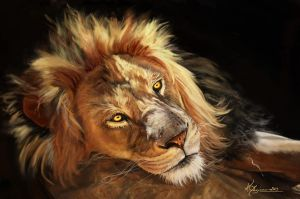 Lion resting by Indu-Art