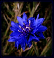 RHAPSODY IN BLUE... by AudraMBlackburnsArt