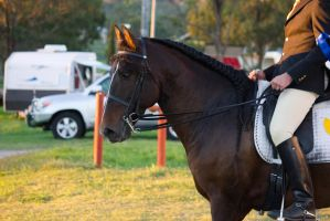 STOCK - 2014 Andalusian Nationals-263 by fillyrox