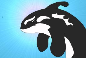 Killer Whale by Dragon2009