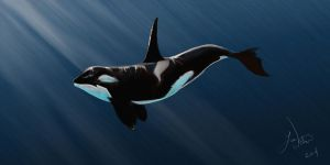 Orca by lwatson74