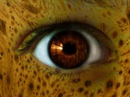Woody eye by souhail88