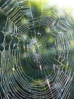 web of life by plums-art