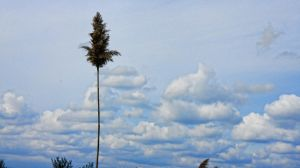 Plant and clouds by patsober