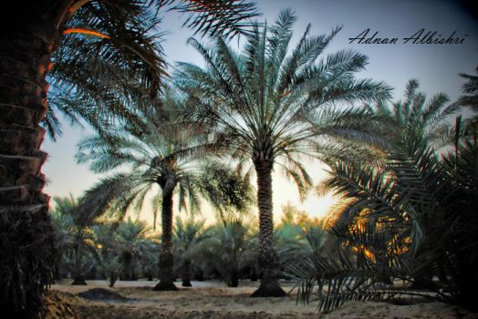 PALMS by albishri