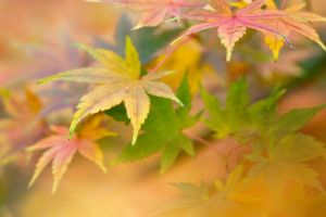 Autumn leaves 22 by TheEtherealSoul