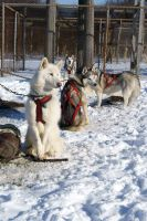 Dog Sled Event 16 by NamekAngelIvy