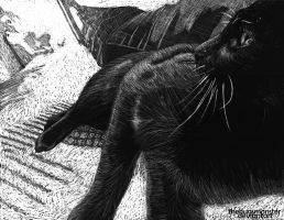 Cat scratchboard by thehugsmonster