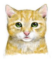 Ginger Kitty by MiDulceLocura
