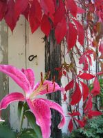 Pink and Red in Fall by JocelyneR