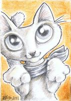 Funny scarf cat by KingZoidLord