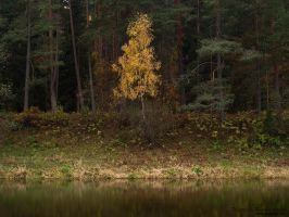 Autumn on the Bank by rici66