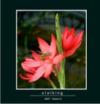 Stalking by Buble
