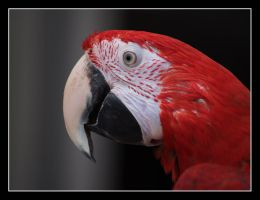 Macaw by sunsetchaser