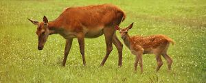Mother and Child by Saromei