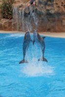 Dolphins 003 by neverFading-stock