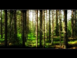 Forest 2 by Mikkoliini