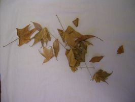 Leaves by ephedrina-stock