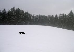 Dog in snow by allenandtady