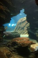 Aquarium Stock 35 by Malleni-Stock