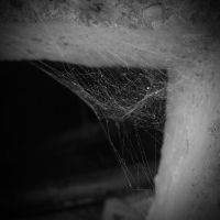 Web by Lost-in-a-day